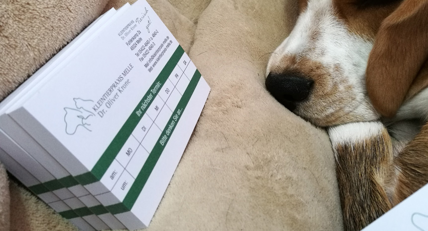 Blöcke-TierarztKrone-1-b